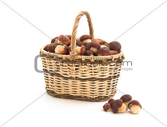 Basket full of cepe mushrooms and small pile on white background