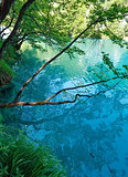 Summer azure  limpid  transparent lake (Plitvice, Croatia)