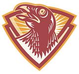 Hawk Falcon Bird Head Shield