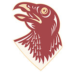 Hawk Falcon Bird Head