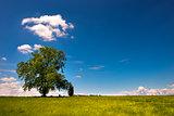 Big Tree on Green Meadow
