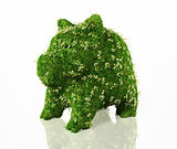 piggy bank covered with grass