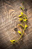 branches forsythia background spring twig flower