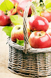 Fresh organic apples with leaves