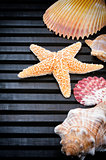 Seashells border on dark background