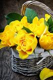 Freshly cut yellow roses