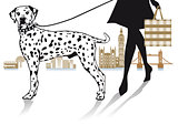 Walk with Dalmatians