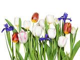 flowers tulips, iris