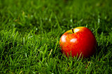 Red apple laying on the grass.