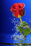 Underwater red rose surrounded by bubbles.