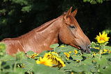 Nice horse with sunflowers