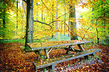 Picnic place in autumn forest