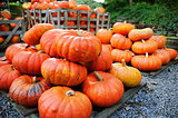 Pile of pumpkins for sale. Shallow DOF