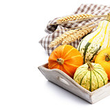 Autumn still-life with pumpkins