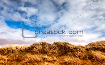 Dunes at the Danish North Sea coast on Fano