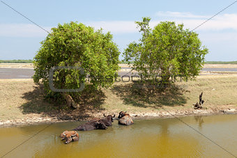 Sri Lanka. Yala National Park. Lake View.