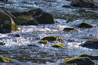 Small river with stones