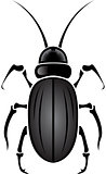 beetle black and white