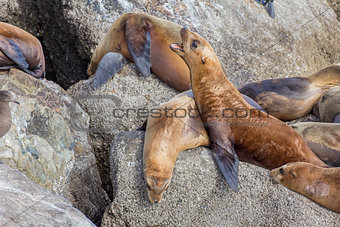 Monterey Bay Sea Lions