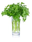 fresh bunch parsley in glass