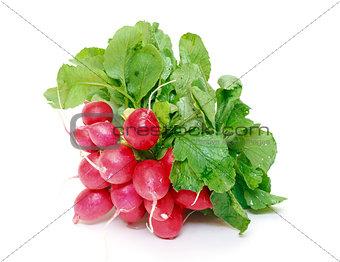 Small garden radish with leaf