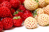 Ripe White and Red Strawberries
