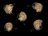 Rotating Brains with Magnifiers