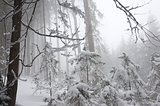 Snowy forest on a misty winter day