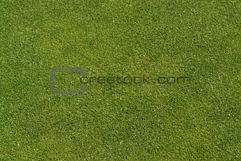 abstract golf green background