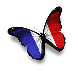 French flag butterfly, isolated on white