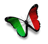 Italian flag butterfly, isolated on white