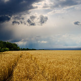dramatic sky over golden field. rain before
