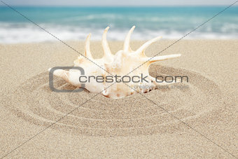 seashell with sand with sea in background