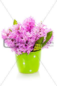 Beautiful Hyacinths