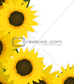 Sunflowers corner