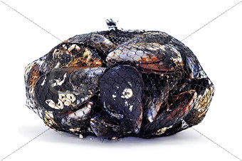mussels in a mesh bag