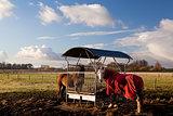 horses in blanket feeding