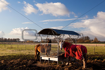 horses in blanket feeding