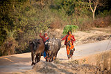 Indian women with pets on road