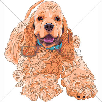 cute sporting dog breed American Cocker Spaniel