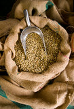 Scoop in Raw Coffee Beans Seeds Burlap Bags