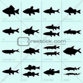 Freshwater fish icons