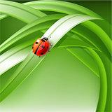 ladybug on grass.