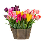 tulip flowers in wooden pot