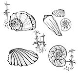 Sea Shells and Snails