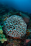 Bleaching Coral Colony