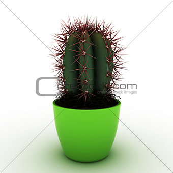 cactus in a vase