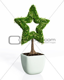 a plant in the shape of star