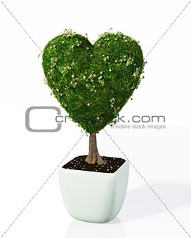 a plant shaped like a heart