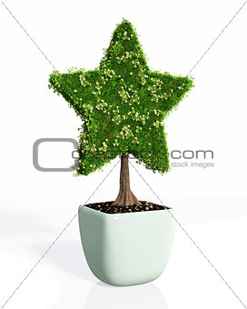 a plant shaped like a star